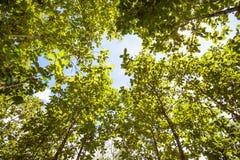 树上面 免版税库存照片