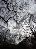 树上面 库存照片