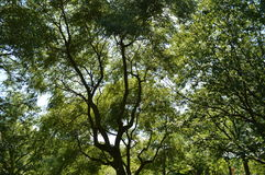 树上面 免版税图库摄影