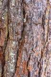 树与细节的皮肤样式 库存图片