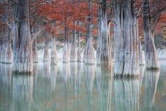 树丛在Sukko秋天的柏树 免版税库存照片