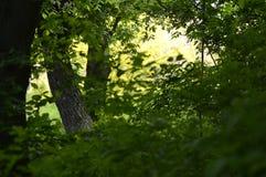 树丛林 库存照片