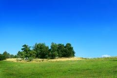 树丛草甸 库存照片