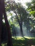 树丛 库存图片