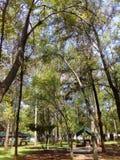 树丛 免版税库存图片