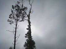 树两个剪影和他们的叶子和分支 免版税库存图片