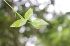 树为地面离开  免版税图库摄影