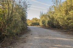 树之间的道路 图库摄影