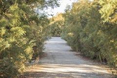 树之间的道路 库存照片