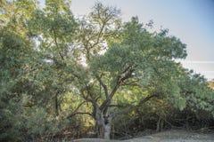 树之间的道路 免版税库存图片