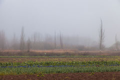 树之间在雾 图库摄影