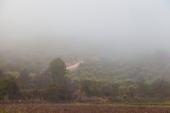 树之间在雾 库存照片