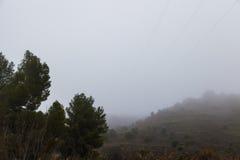 树之间在雾 免版税库存图片