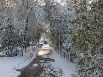 树之间的道路在雪 库存照片