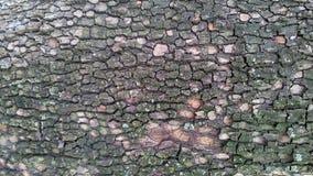 树五颜六色的吠声  免版税库存照片