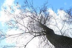 树从狗` s方面 免版税库存图片