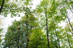 树低角度视图在forrest的与天空 库存照片