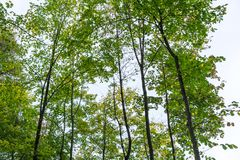 树低角度视图在forrest的与天空 免版税库存图片