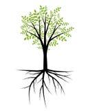 树例证 库存图片