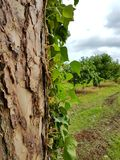 树俯视的果树园 库存照片