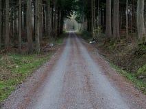 从树做的隧道在森林里 免版税库存图片