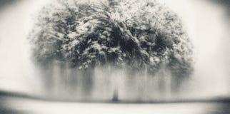 冻树停止运动 免版税库存图片