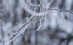 树光秃的分支在一个冬日 图库摄影