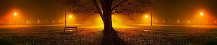 树全景在有雾的夜在公园 免版税库存图片