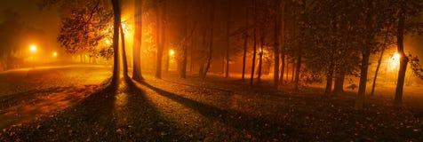 树全景在有雾的夜在公园 库存图片
