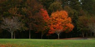 树全景照片在秋天 免版税库存照片