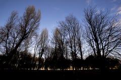 树公园剪影微明的 库存图片