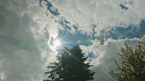 树冠上反对一朵蓝天和白色云彩 免版税图库摄影
