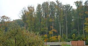 树冠在秋天 影视素材