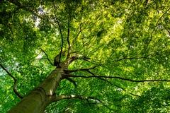 树冠 免版税库存照片