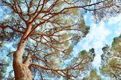 树冠 免版税图库摄影