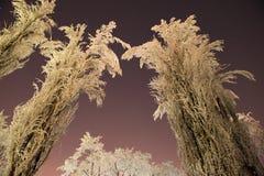 冻树冬天夜星 免版税库存照片
