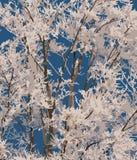 树冰。 免版税图库摄影