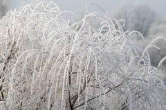 树冰冷在冬天 图库摄影