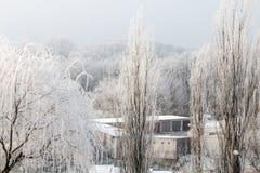 树冰冷在冬天 免版税库存照片
