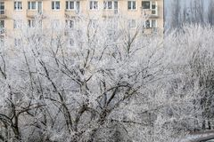 树冰冷在冬天 免版税库存图片