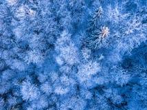 树冰和雪在云杉的森林鸟瞰图 免版税库存照片