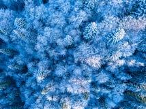 树冰和雪在密集的森林鸟瞰图 免版税库存照片