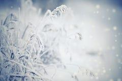 树冰和雪的干燥植物 免版税库存照片