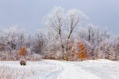 树冰在落叶林里 免版税库存图片