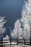 树冰报道了农村风景 库存图片