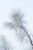 树冰报道的分支 免版税库存图片