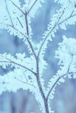 树冰森林39 免版税库存图片