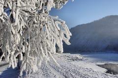 树冰横向雪结构树冬天 免版税库存照片