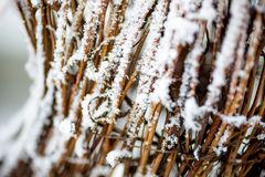 树冰盖的草丛 免版税库存图片