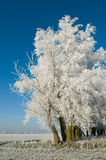 树冰结构树 库存图片